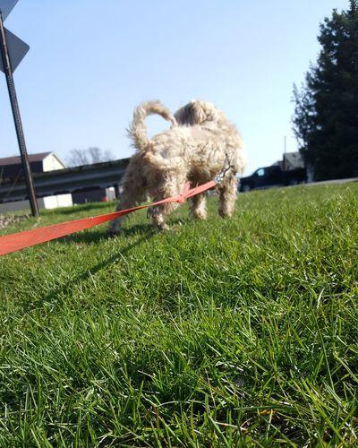 Mydog♡ Dog Dogswimming Springtime Shihtzu Mixedbreed Swimming Hanging Out Enjoying Life Hi! Hello World