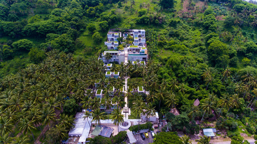 Svarga resort is on the island of Lombok. Tree Plant Architecture Building Exterior Built Structure Growth Green Color High Angle View Nature Foliage Day Lush Foliage Building Residential District Land No People House City Outdoors Scenics - Nature Forest Hotel Resort Resort Hotel Forest Photography
