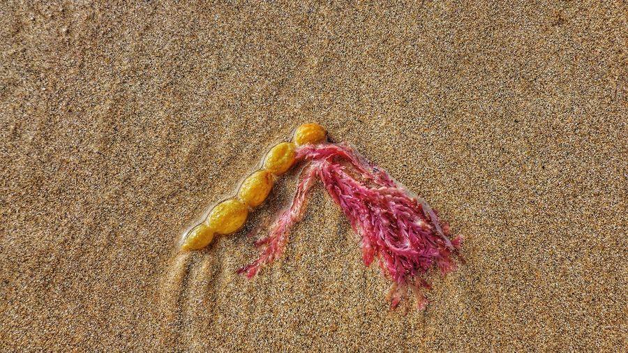 Seaweed On Wet Sand At Beach