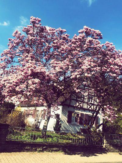 spring🌸 Spring
