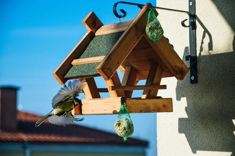 Bird hovering around birdhouse outdoors