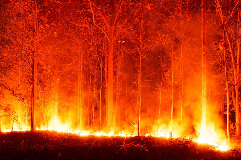 View of fire in forest at night