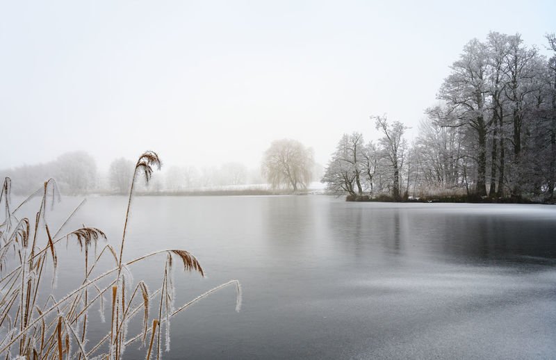 frozen lake with reed and bare trees covered by hoar frost on a on a cold foggy winter day, gray landscape with copy space Lake Frozen Winter Landscape Copy Space Tree Bare Trees Ice Snow Hoar Frost Frost Cold Gray Season  Tranquility Beauty In Nature Fog Water Nature Day Outdoors Scenics - Nature Reed Tranquil Scene Rural Scene