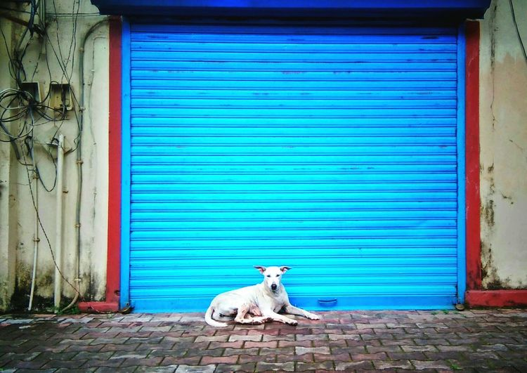 Close-up of a dog sitting in front of building