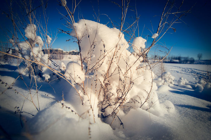 More snow Alberta Blue Sky Canada Close-up Colors Day Free Landscape Landscape_Collection Nature No People Outdoors Single Flower Sky Whie Winter