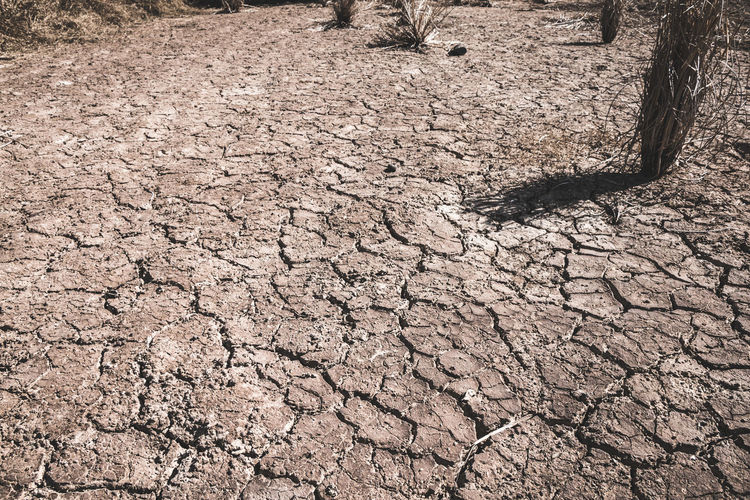 Dirt Nature Land Arid Climate Cracked Dry Climate Scenics - Nature Field Drought Textured  Barren Mud Plant Outdoors Landscape