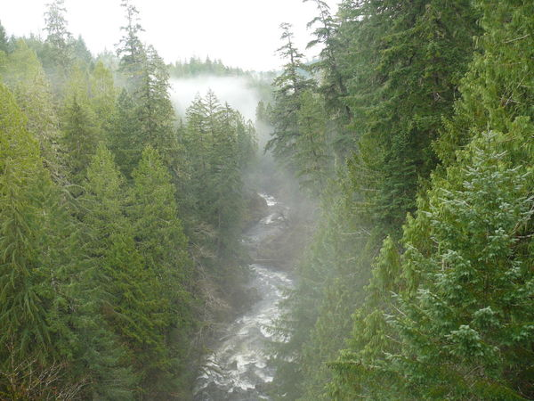 Nature Photography Nature_collection Colors Of Nature Nature Valley Fog Foggy Foggy Landscape River Fog Over Water Fog Over River Forest Photography Forest Trees And Nature Trees Fog Between Trees Lost In The Landscape