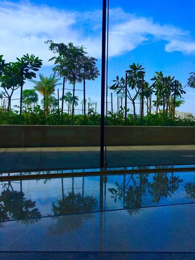 IPhone 6s Plus Palm Tree Sky Tree Reflection Nature Beauty In Nature Tranquility Scenics Tranquil Scene Blue Blue Sky Blue Sky White Clouds