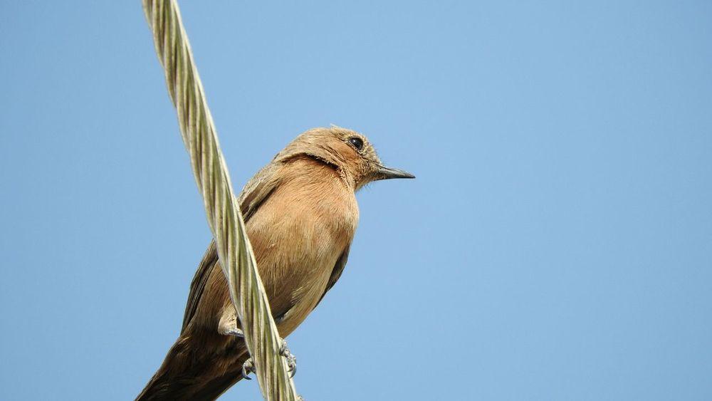 Sonya3000 Bird Wildlife Photography Bird Photography Birdwatching