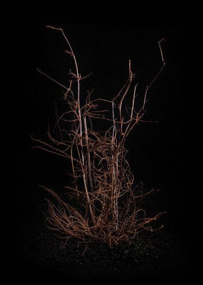 Close-up of illuminated tree against black background
