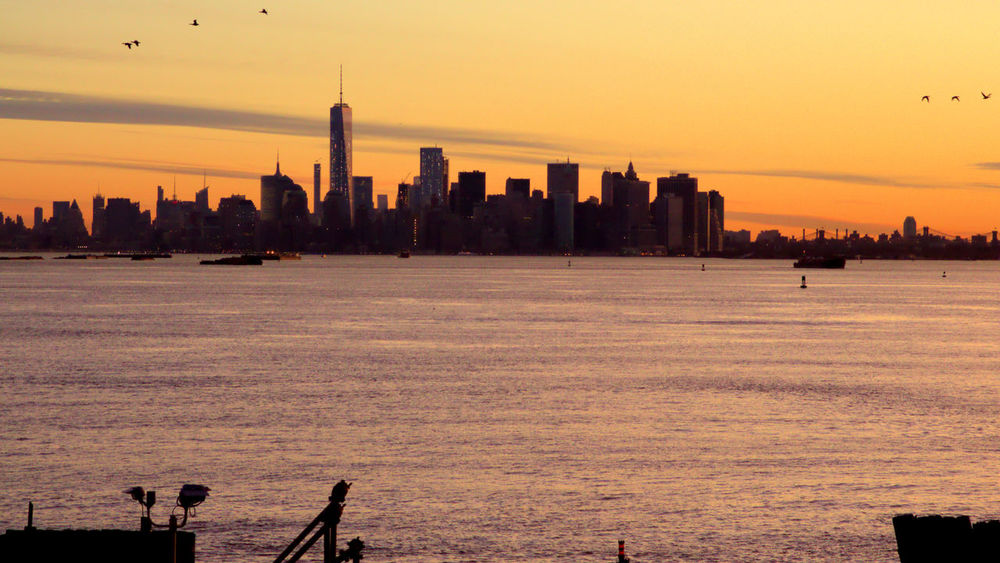 New York Skyline  Architecture Bird Building Exterior Built Structure City City Life Cityscape Clear Sky Downtown District Financial District  Growth Modern New York Harbor No People Outdoors Silhouette Sky Skyline Skyscraper Sunset Tall Tower Travel Destinations Urban Skyline