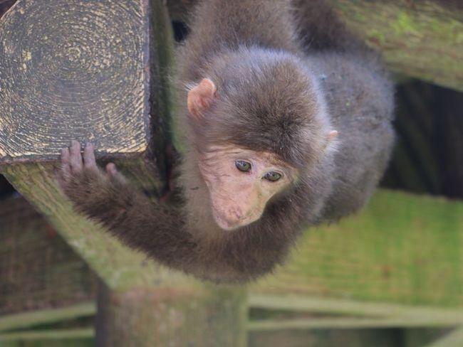Emei Emeishan Emei Mountain Monkey Monkey Face Monkey Forest Young Animal Young Monkey Wildlife Wildlife & Nature Nature Wildlife Photography Wildlife Photos Wildlife And Nature Wildlifephotography China Chinese Nature China Photos