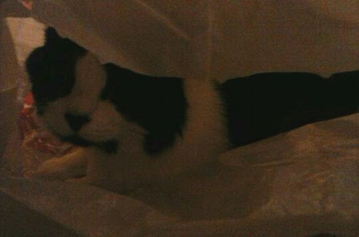 She knows you're there.. Beautiful ♥ Love My Kitty