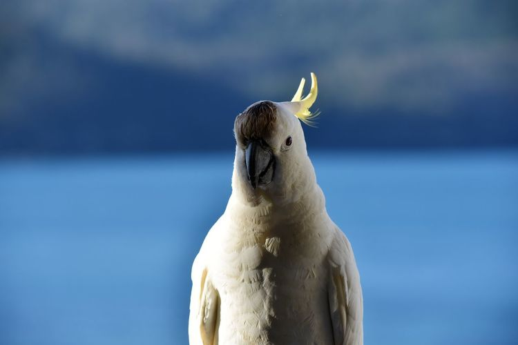 Cockatoo in the shade