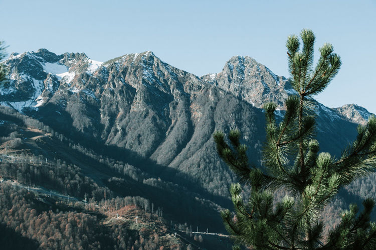 View of mountains. Coniferous Tree Snowcapped Mountain Formation Outdoors Mountain Peak Growth Cold Temperature Landscape Physical Geography Clear Sky Environment Idyllic Non-urban Scene Day No People Nature Tranquility Mountain Range Tranquil Scene Beauty In Nature Sky Scenics - Nature Plant Tree Mountain Snow Winter