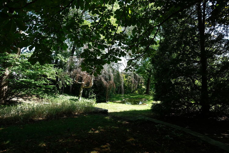 Montreal nature Woods Greenery Vegetation Botanical Flora Relaxing Moments Forest