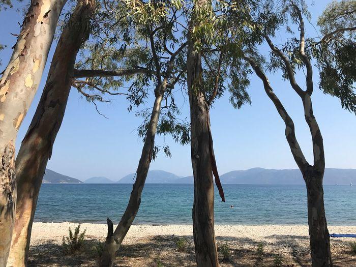 Nature Tree Sea
