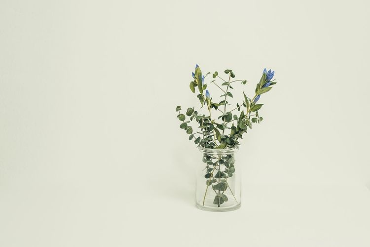 Flower Studio Shot White Background Copy Space No People Vase Fragility Close-up Nature Flower Head Freshness Indoors  Day