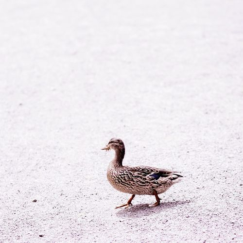 This little duck. VSCO Simplicity Minimalism Cute