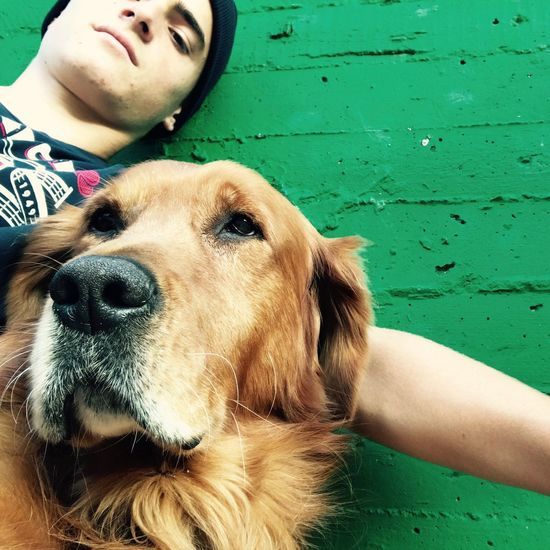Low Angle Portrait Of Young Man With Golden Retriever By Green Wall