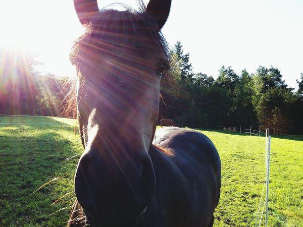 Horse Animals Nature Germany