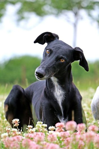 Close-up of black dog sitting outdoors