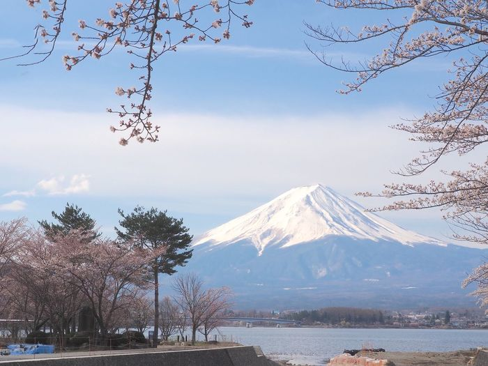 Lake Mount FuJi Cherry Blossom Trees Mountain Tree Beauty In Nature Snow Cold Temperature Plant Scenics - Nature Sky Tranquil Scene Tranquility Snowcapped Mountain Nature Volcano Branch No People Outdoors