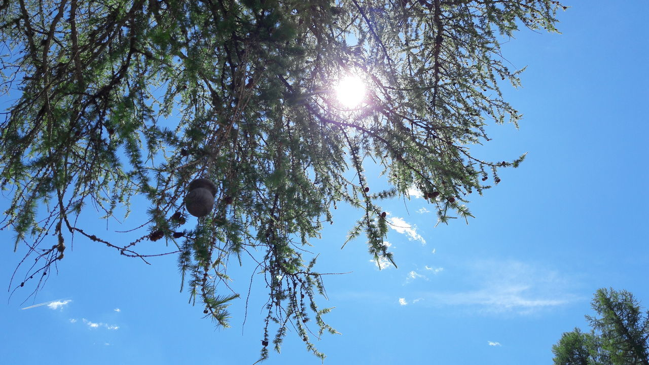 sky, tree, low angle view, plant, sunlight, nature, growth, beauty in nature, day, branch, no people, sun, blue, tranquility, sunny, sunbeam, lens flare, outdoors, clear sky, bright