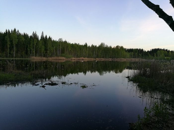 2 swans at the pond Swan Swans Swans ❤ Pond Pond Reflections Water Reflections Sky Reflection Sky Reflections Sky Reflected In Water Forest Nature Purist No Edit No Filter Noedit Nofilter Oo HuaweiP9 Smartphone Smartphone Photography Outdoors Summer Finland Summer ☀ Bird Wildlife Photography The Great Outdoors - 2016 EyeEm Awards