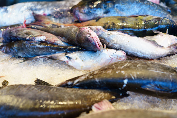 Close-up of fish at jessie taylor seafood market