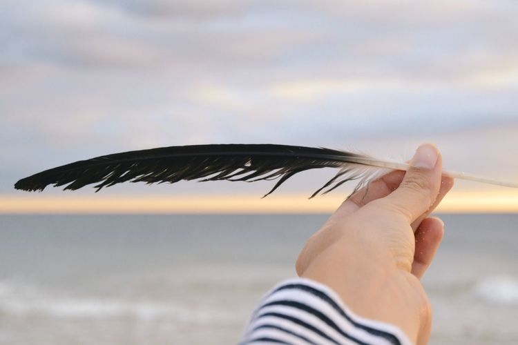 Cropped Hand Of Woman Holding Feather At Beach