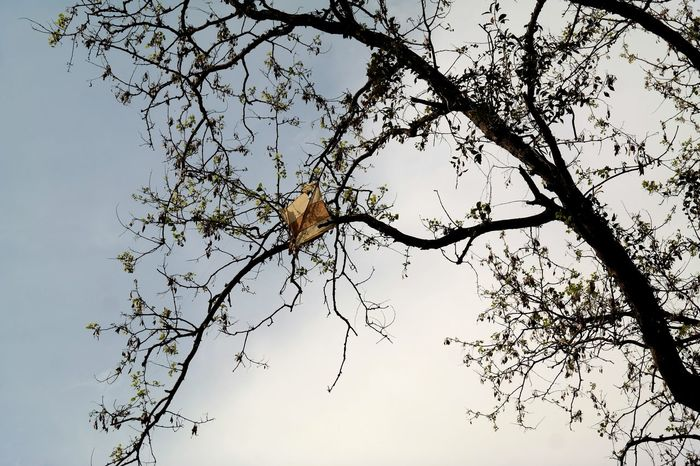 Kite is like a dream, stuck on a tree. To release it , you have to take it out yourself . Nature No People Branch Flying High Beauty In Nature Kite Stuck Broken Dreams Bare Tree Thoughtoftheday Thoughts & Quotes ThoughtForTheDay