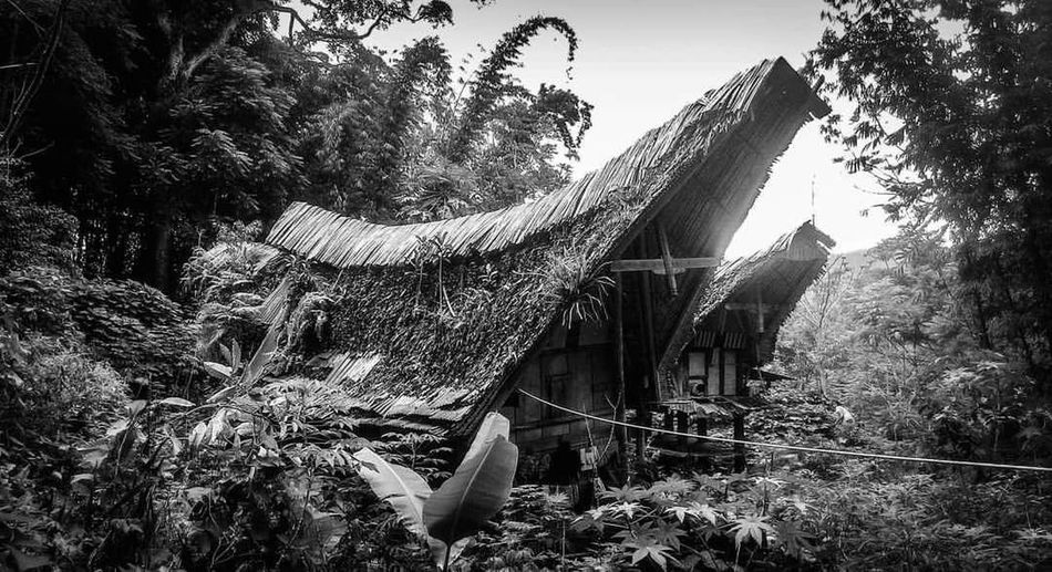 The Secret Spaces INDONESIA Toraja Blackandwhite Roof Beauty In Nature Tree