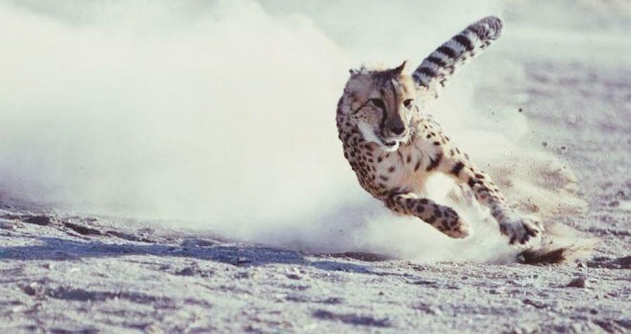 Grrr GRRRRRRR! Rawr! Arrr Arrggg Felinos Felino Cat Runing Animal