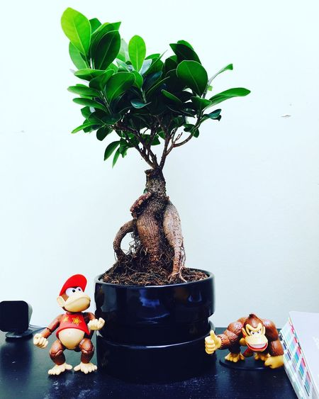 The new desk plant Bonsai Bonsai Tree Photography IPhoneography Tree Plant Desk DiddyKong Donkeykong Monkey Action Figures Today's Hot Look