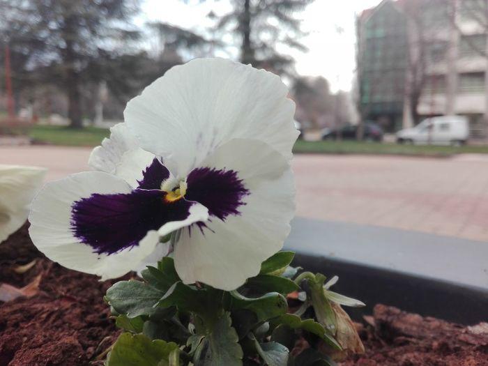 les fleurs Naturelles Les Fleurs Sont Belles Fleurs Flowers Nature Flower Head Flower Petal Blossom Springtime Close-up Plant