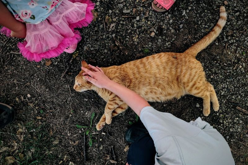 Directly above shot of children stroking ginger cat on field
