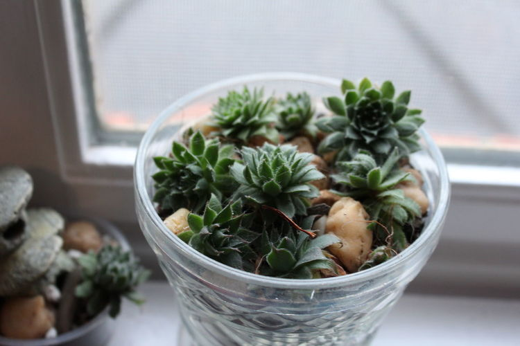 Close-Up Of Plant In Bowl On Window Sill