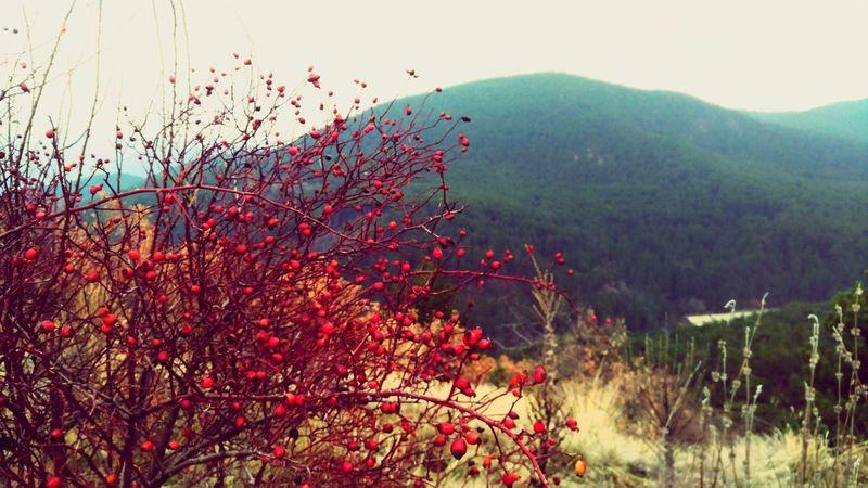 Nature Kuşburnu Colors Of Nature