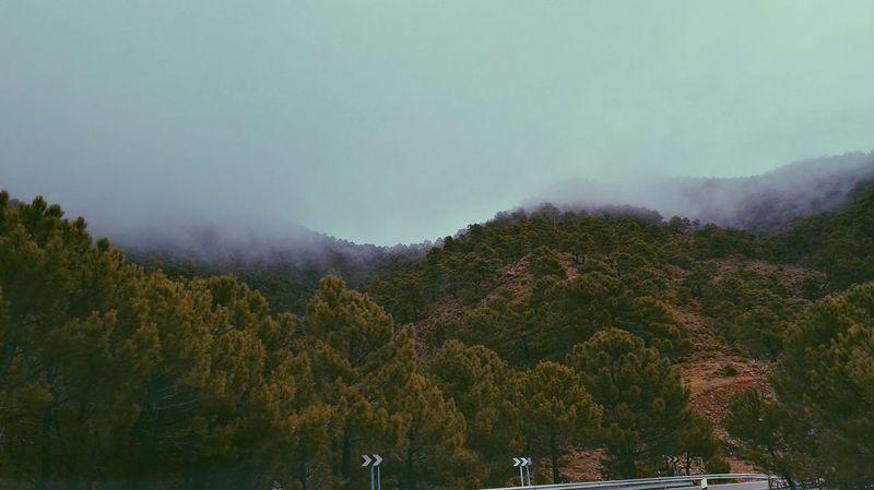 Foggy Landscape Outdoors Nature Tree Mountain Sky Landscape Andalusia Theme Andalucia, Spain Roadway Roadtrip ✌ Malaga Tree No People First Eyeem Photo Nature