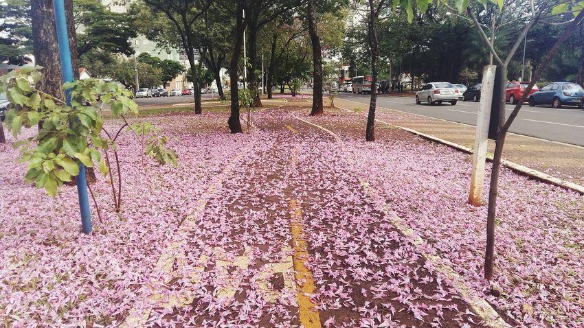 No mesmo instante que recebemos pedras no nosso caminho ,flores estão sendo plantadas ao longe.Quem desiste não as vê. William Shakespeare