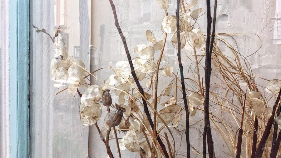 Pastel Colors Dried Plant Dried Flowers CarolSharkeyPhotography Maine