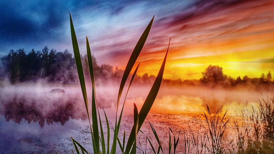 Sunset Cloud - Sky Plant Landscape Nature Reflection Sky Dramatic Sky Scenics Dawn Outdoors Purple Morning Beauty In Nature Water Growth Sunlight Lake No People Freshness Nature