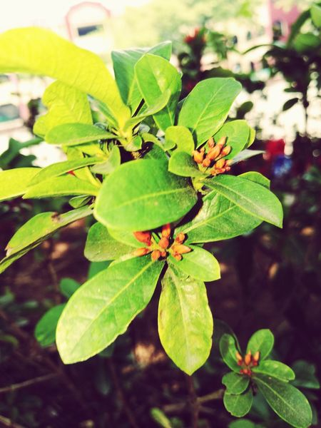 Green Color Plant Flower Head Beauty In Nature No People