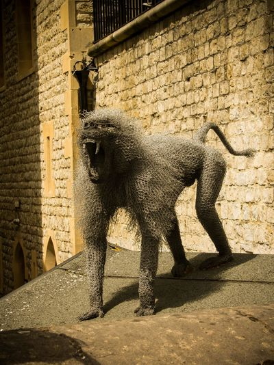 Ape Art And Craft ArtWork City LONDON❤ London Sightseeing Tower Of London Travel Photography Apes London_only Metal Metalsculpture Realistic Realistic Art Sculpture Travel Destinations Travelphotography