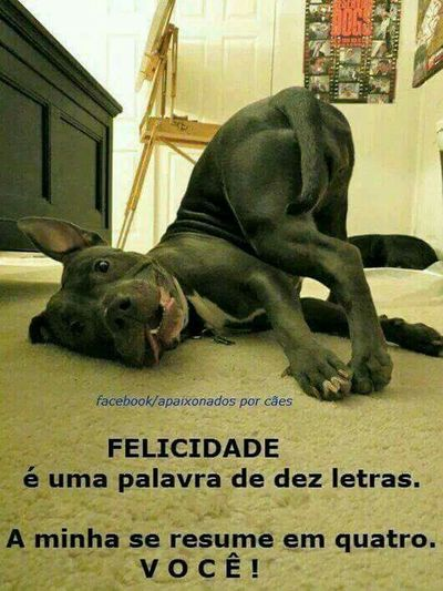 Lovedogsforever Lovedog 😁 BeHappy♡ Beautiful Animals  LongLiveAnimals Hello World HelloBrazil HeLLoPeople.