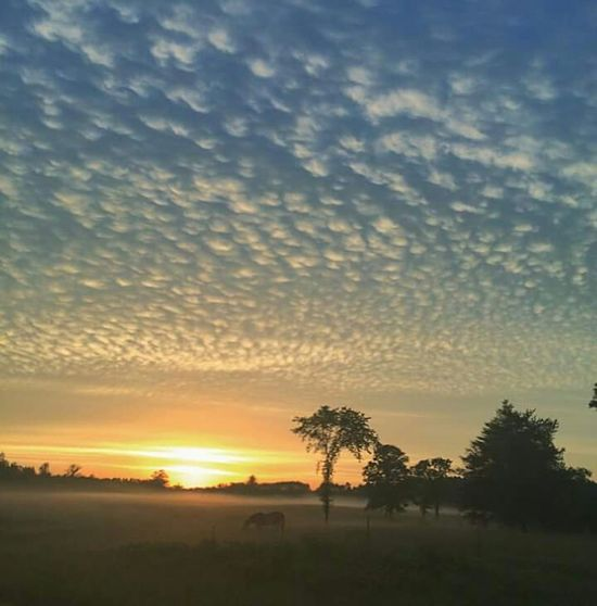 Sunset Sky Tree Cloud - Sky Nature No People Outdoors Beauty In Nature Horses Grass Animal