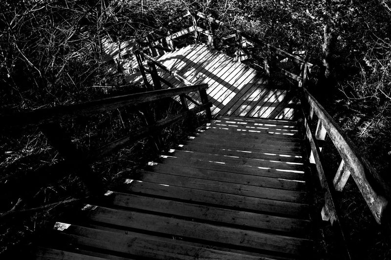 Black And White Blackandwhite Change Direction Destination Down Nature Path Pathway Staircase Stairs The Way Forward Walkway Way Wood Wood - Material
