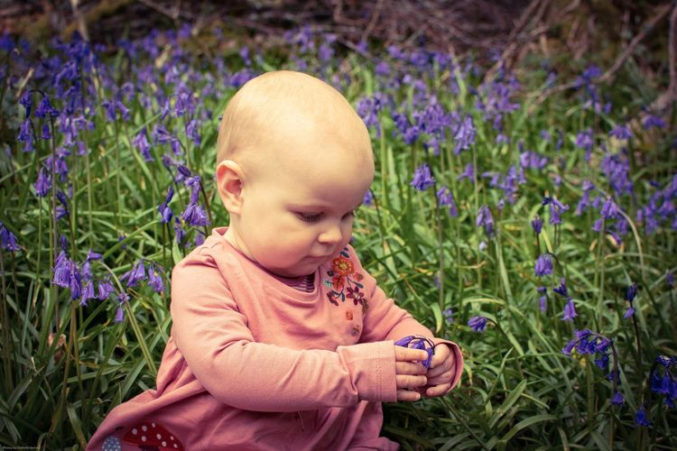 Cute boy looking at flowering plants on land