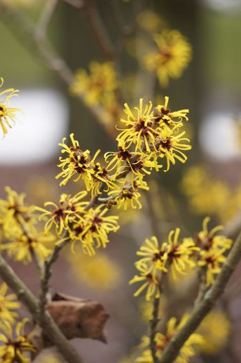 Close-up of yellow flowering plants growing outdoors